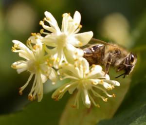 Livskraft är närvarande hos både växter och djur.
