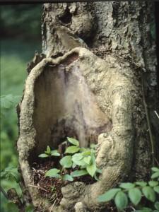 I naturen spirar livskraften så fort möjlighet ges.
