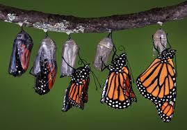 Fjärilens transformation från larv till fjäril är bekant, men vi kan också transformera svåra upplevelser vi bär på och då frigöra inre kraft och förmåga.